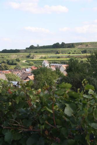 Sasbach-Leiselheim