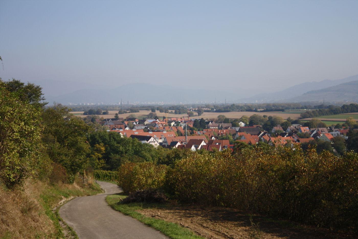Blick vom tuniberg auf Minzingen bis nach Freiburg