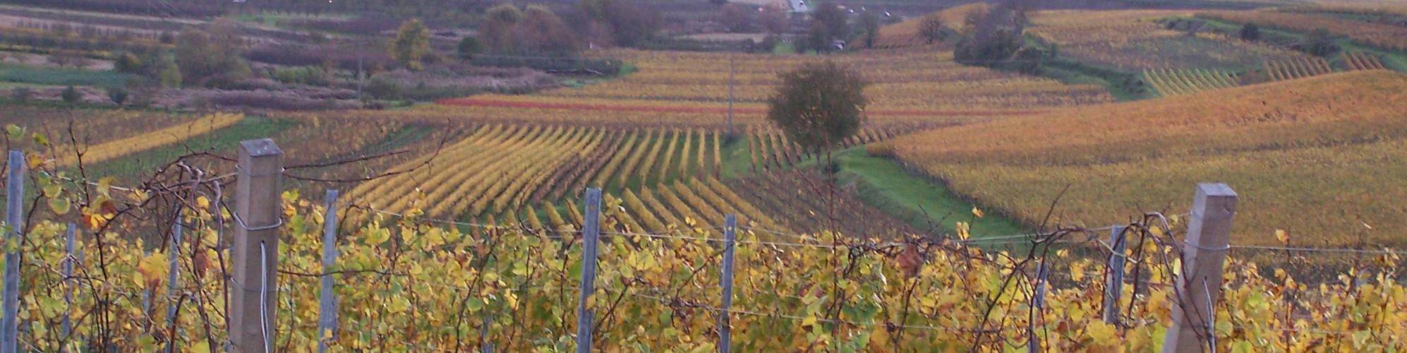 Weinlagen am Kaiserstuhl