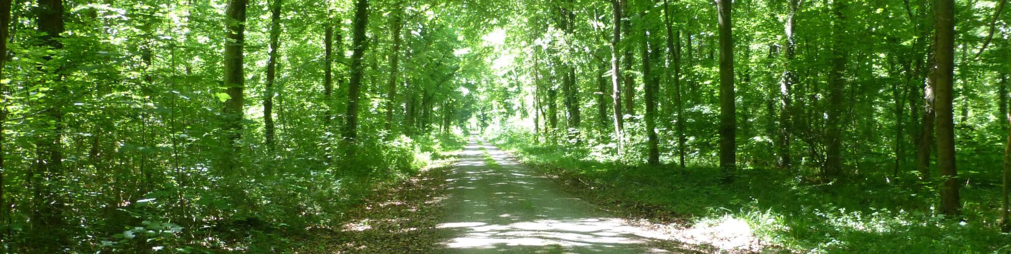 Waldweg im Tauberdiuessen