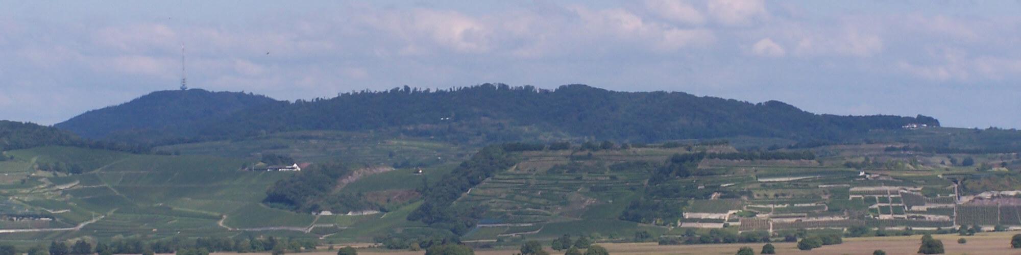 Weinbau bei Breisach