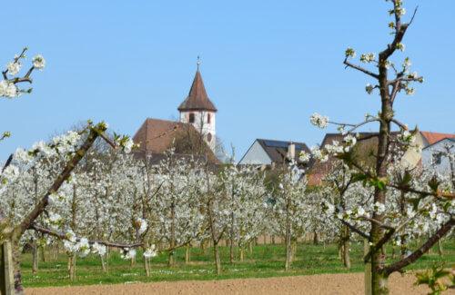Edingen Ortsteil Königschaffhausen