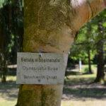 Beschriftung am Baum im Liliental