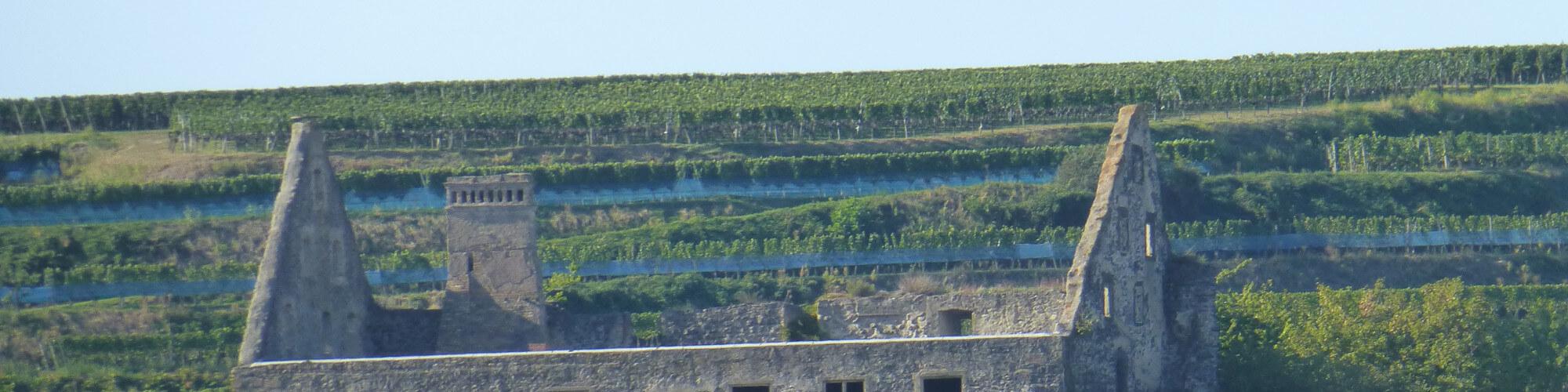 Burkheimer Wein